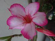 3月の石垣島、花の季節です