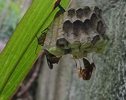 蜂の巣発見