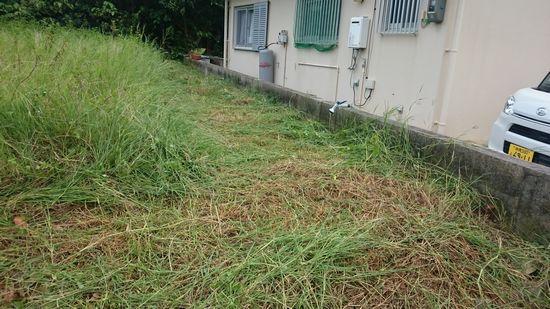 隣の空き地の草刈