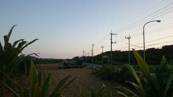 夕方には、もう丸裸の畑です