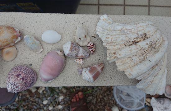 ビーチで拾った貝殻たち