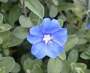 かわいいお花です。