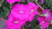 お花満開のプランターです。