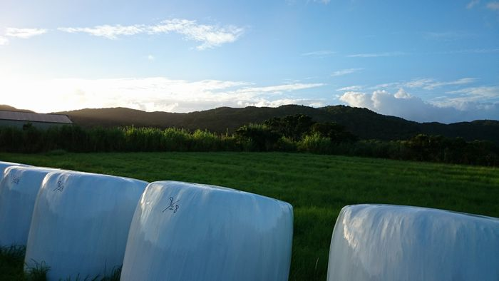 牧草ロールと牧草と夕暮れ前