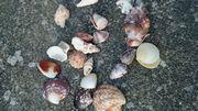 今日もきれいな貝殻いっぱいです