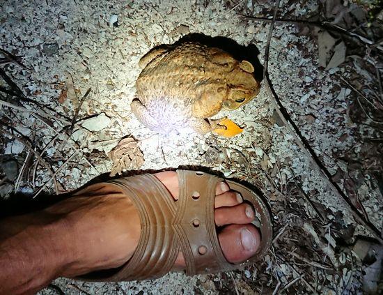 笹川の足は、28cm!その半分くらいはあります