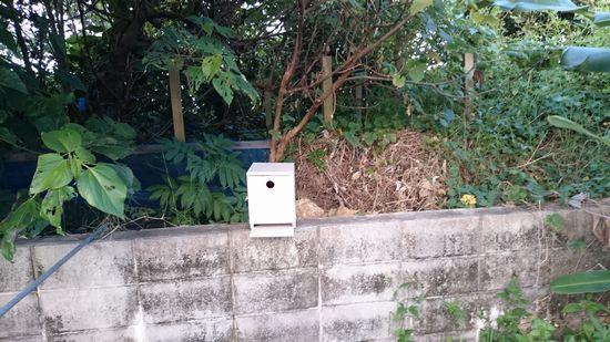 鳥の巣箱を設置して、数日。