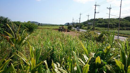 隣の畑、収穫が始まりました