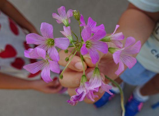 きれいなお花です