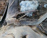 蛇の抜け殻