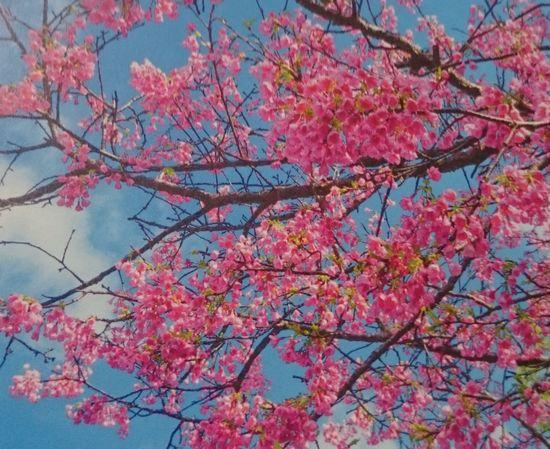 春を探してみました。