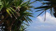 晴れた二月の石垣島は