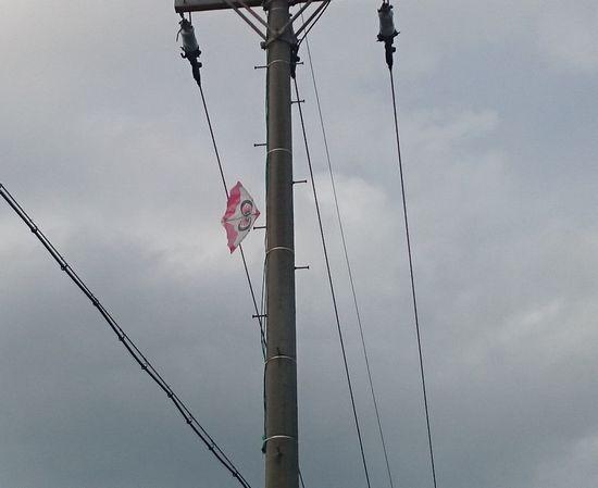しまった!電信柱に。。。