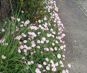 どの集落も道端の花がきれいです