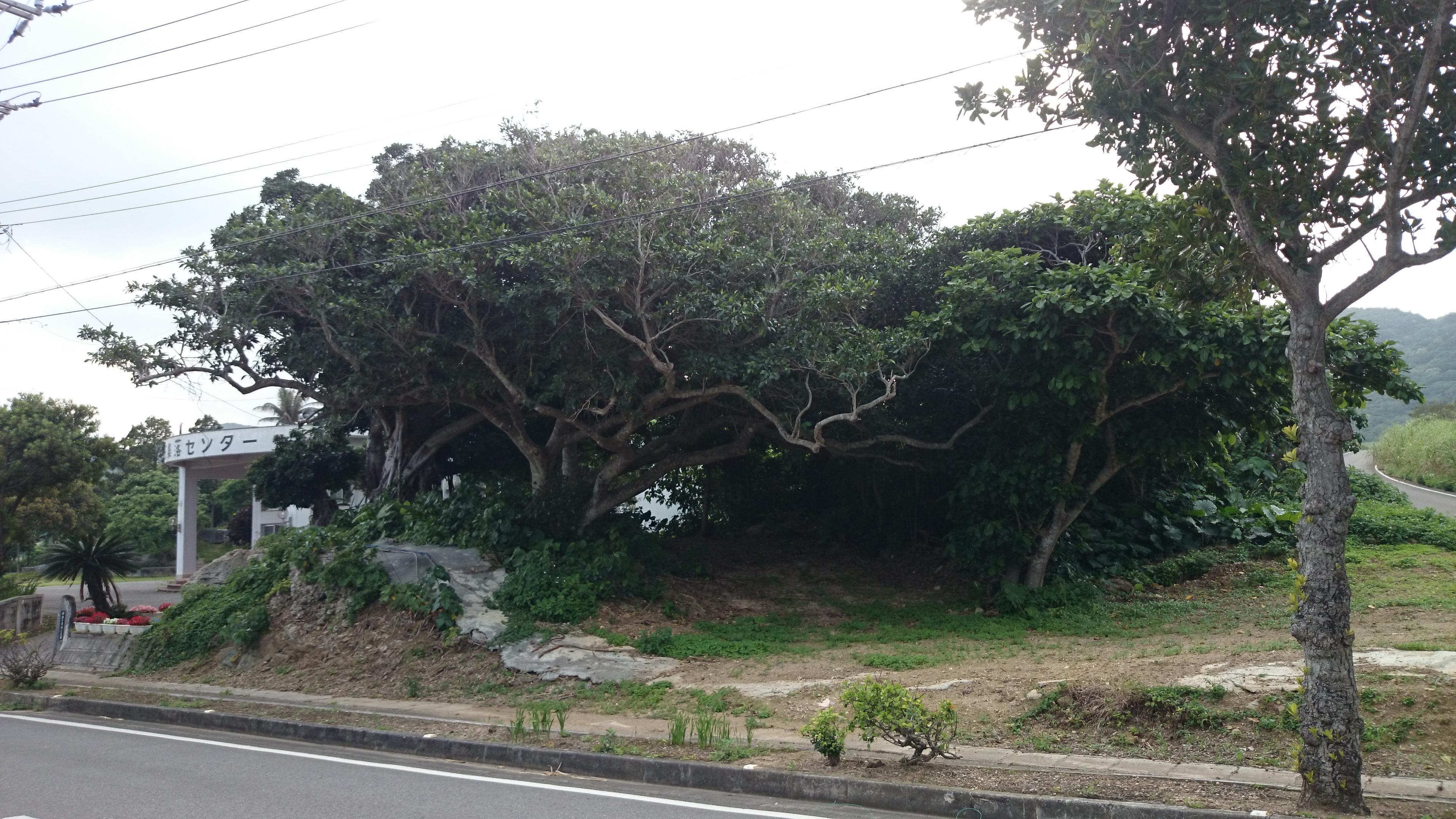 公民館の木
