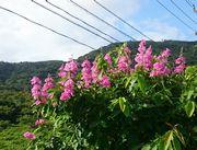 鮮やかな花です