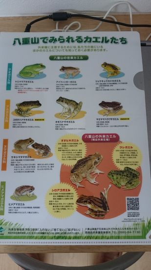 カエルのクリアファイル