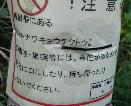石垣島をドライブしていると、