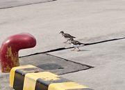 港に鳥さん