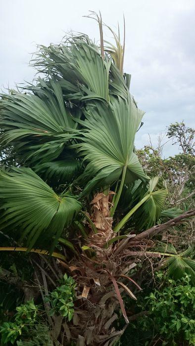 昨日の台風の強風で。