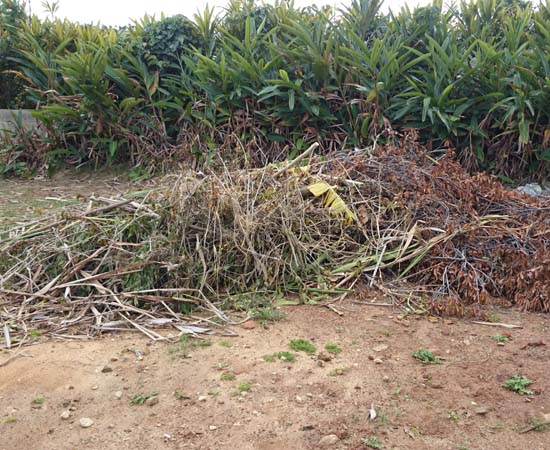 剪定でたまった枝たち