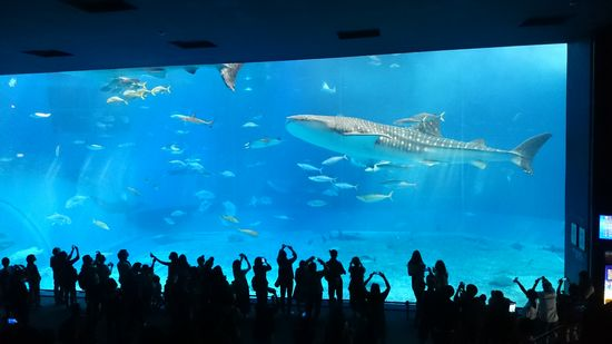 最後は、美ら海水族館へ