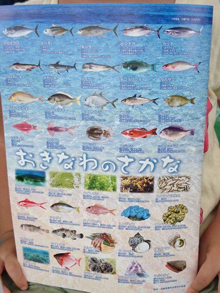 裏は沖縄のお魚さん