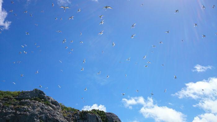 石垣島の陽射しはとても強い