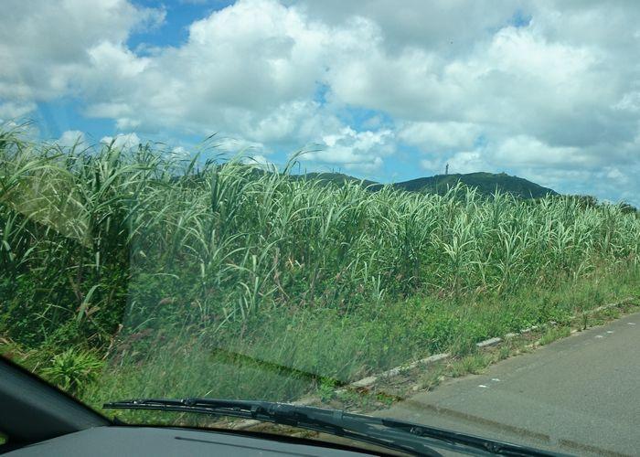 サトウキビ畑を横に見ながら