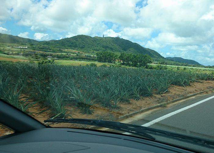 パイナップル畑もあります