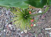 また面白い植物