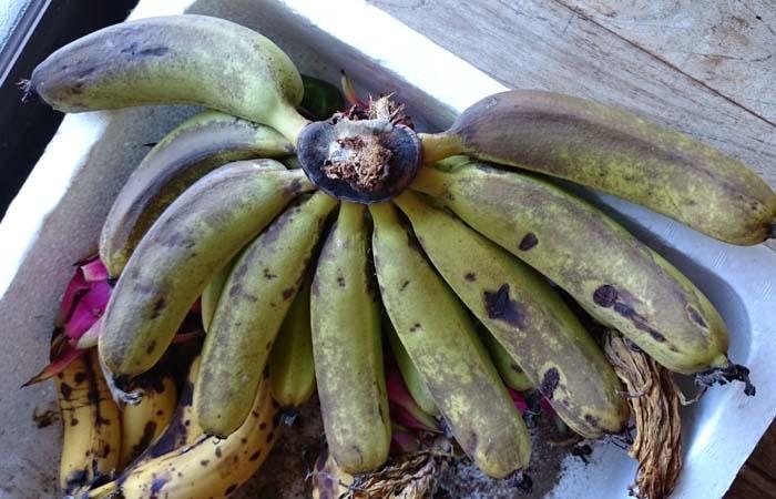 バナナ、ちょっと色が変わってきました。