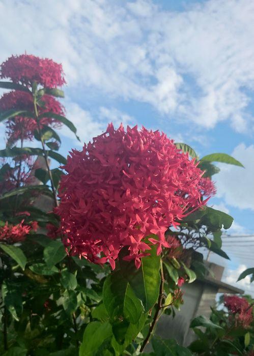 とってもいきいき咲いています。