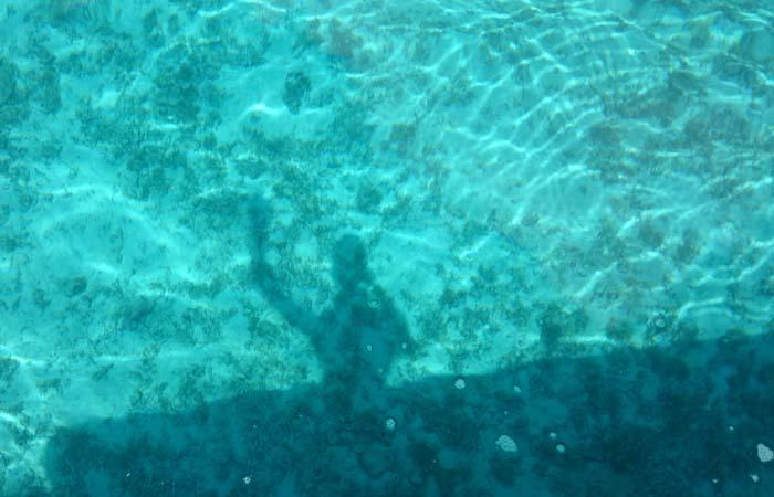 水底に映る笹川の影