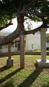 小学校の校庭の木