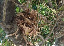 あっ鳥の巣