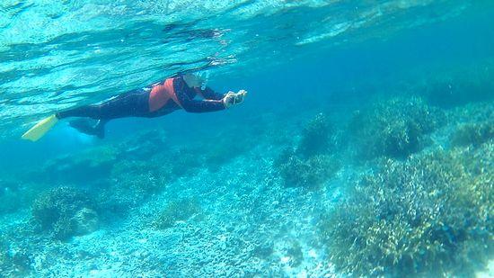サンゴ増え始めると撮影開始です