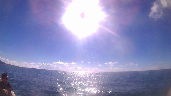 今日も太陽が本気を出しています。