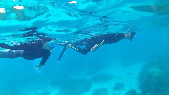 すぐにすいすい泳ぎ始めていきます。