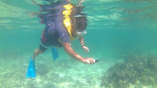 目的は水中撮影
