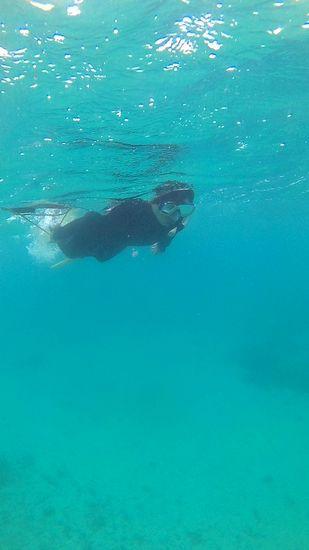 慣れた泳ぎで楽しんでいます。