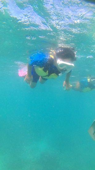 カツキ君、絶好調の泳ぎです