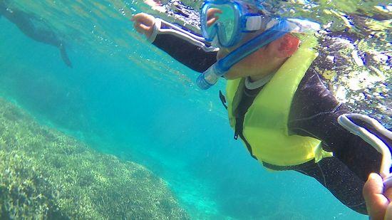 ナオ君、水中世界に没頭です。