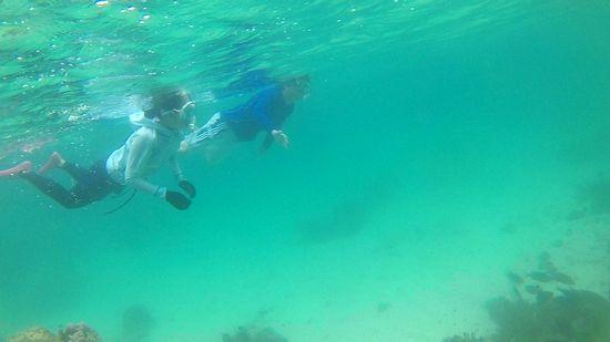 水中世界を自由自在に泳ぐN輪さんご夫婦です