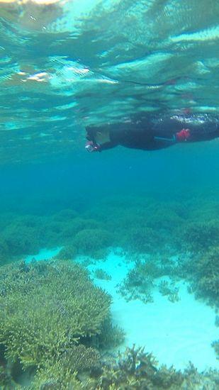 サンゴに舌鼓の旦那さん