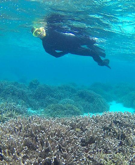 横っ跳び泳ぎでサンゴを楽しんでいます。