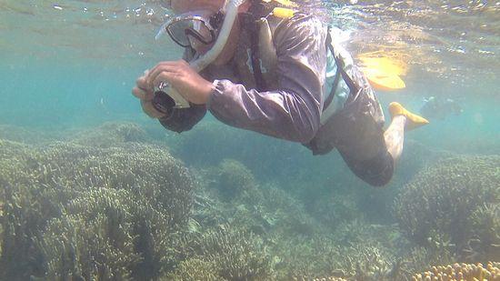 水中写真に没頭のO保さんです