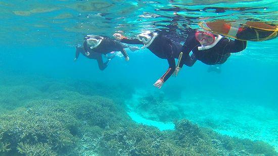 サンゴ群落が広がり初めていきます。