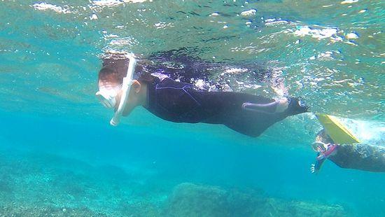 一人で自由に泳ぎ回っています
