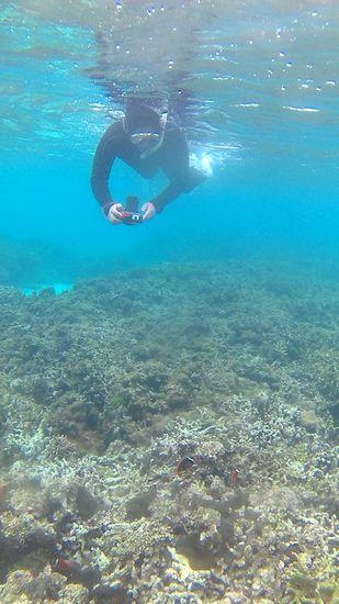 水中撮影を楽しまれています